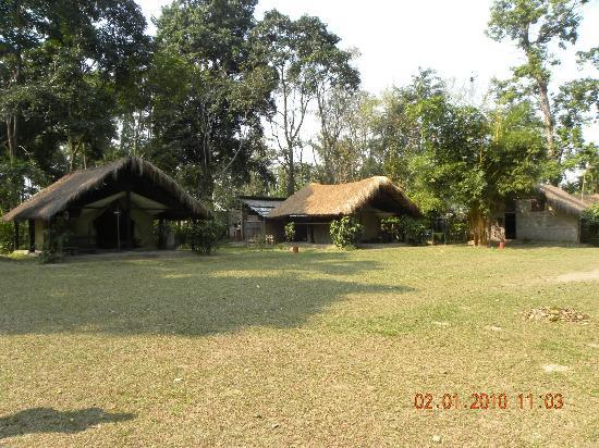 Nameri National Park, อินเดีย: Eco Camp