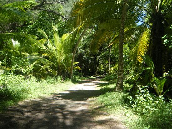 Desroches Island: Woodland path
