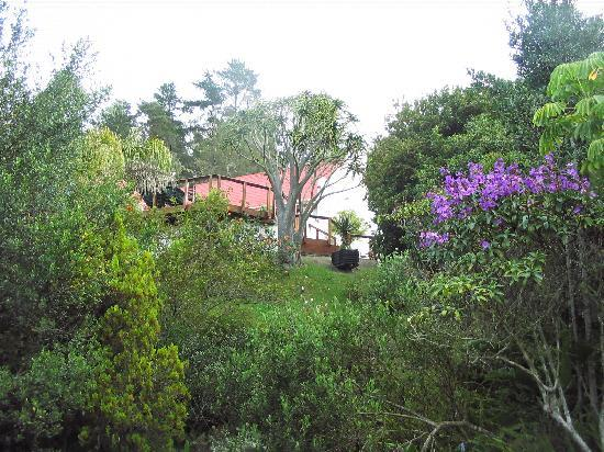 Masescha Country Estate: Wild Garden