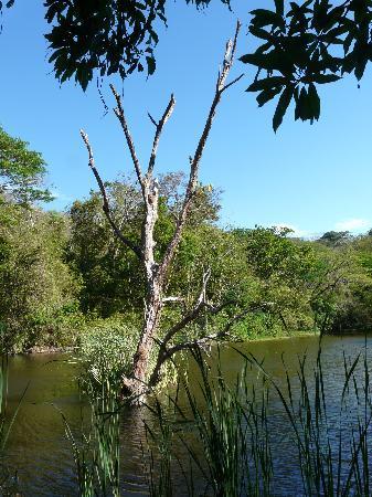 Pueblo Antiguo Lodge & Spa: Pond