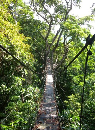 deals minute moonshine canopy line tour