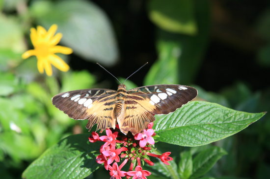 Butterfly Rainforest Gainesville Fl Top Tips Before