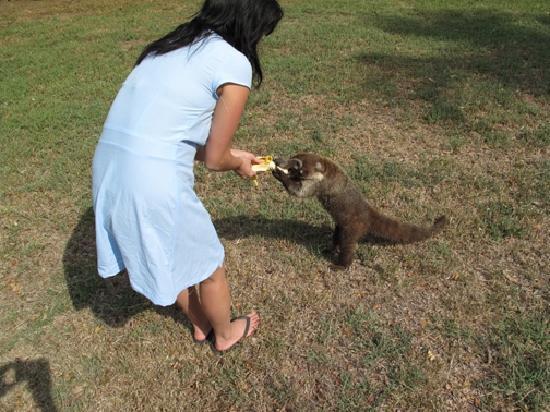 Hotel Paraiso del Cocodrilo: Me feeding Pootsy a banana