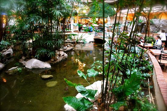 Embassy Suites by Hilton Anaheim North: The koi pond in the atrium