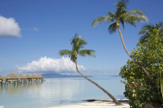 InterContinental Bora Bora Le Moana Resort: View from the pool