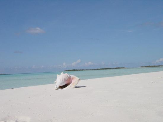 Isla El Gran Roque รูปภาพ