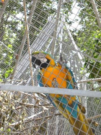 Barcelona Zoo: un guacamayo