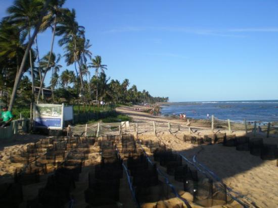 Bilde fra Praia do Forte