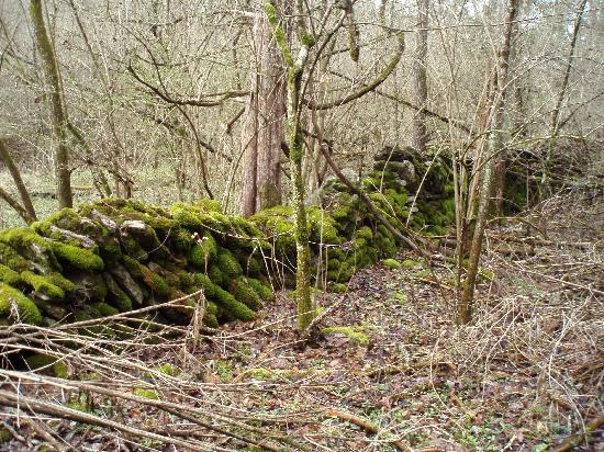 Raven Run Nature Sanctuary: Stone Wall