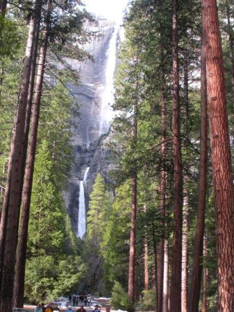 Yosemite Falls -5th tallest water fall in the world. 2,425 ft
