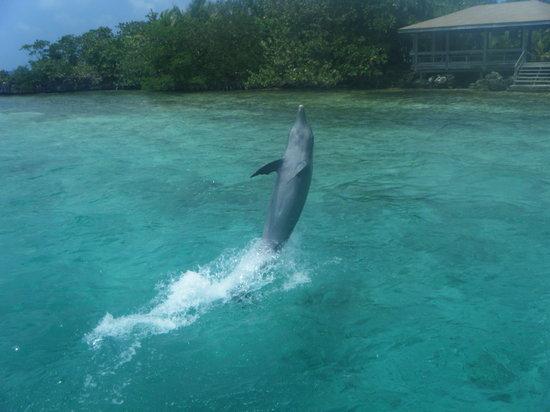 Las Sirenas Hotel & Condos: i delfini