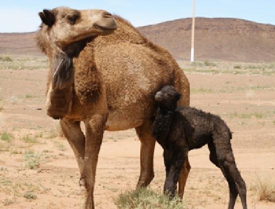 Kasbah Ouzina : nuestros amigos los animales