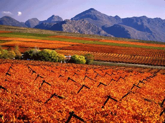 Cape Wine and Leisure Tours: Cape Winelands