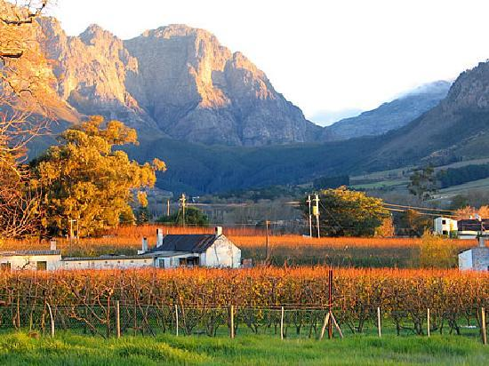 Cape Wine and Leisure Tours: Franschhoek