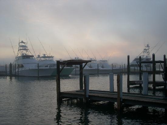 Sea Isle Motel: Marina at Rotten Ralph's restaurant