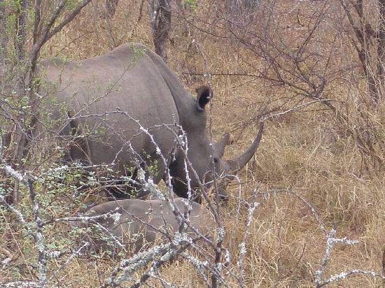 Garonga Safari Camp: Big Mama white rhino with baby