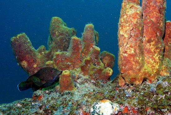 DiveVersity Aruba