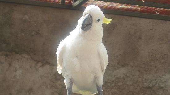 Dar Ayniwen Villa Hotel: Resident parrot, Cuckoo