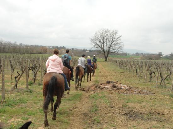 Fun in Tuscany: HOrseback riding through the vineyards