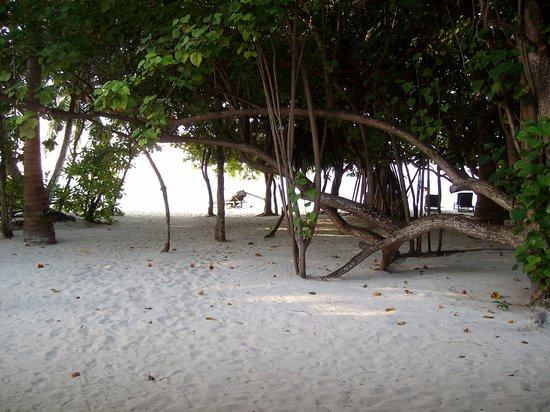 Vilamendhoo: la spiaggia vicina alla nostra stanza - lato nord isola