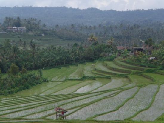 Legian, Indonesien: Reisfelder