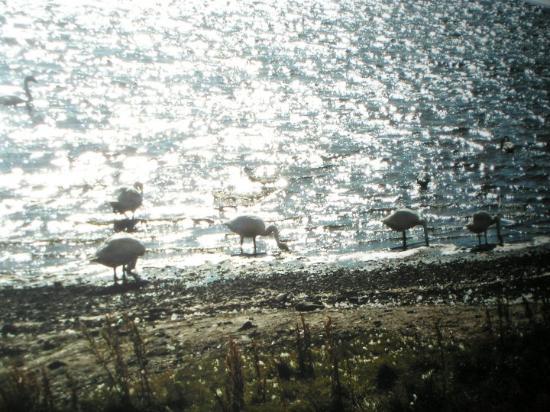 Vik, Island: strani uccelli a riva