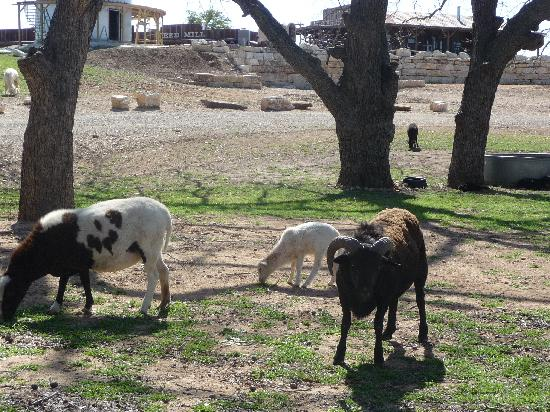 River Road Ranch Resort: animals