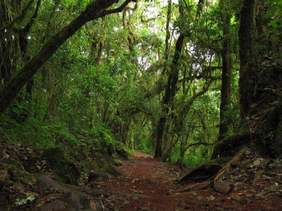 Mount Kilimanjaro: Marangu -> Mandara hut