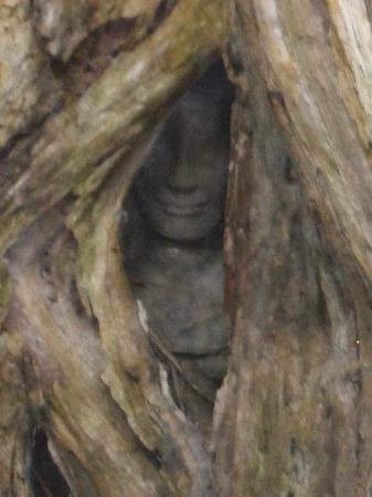 Angkor Spirit Palace: Ta Phrom