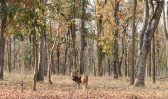 Mahua Vann Resort: Great forest with riot of colors, deer, tigers,