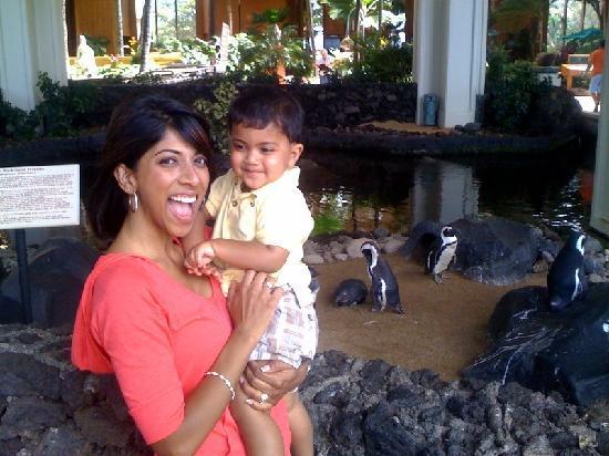 Hyatt Regency Maui Resort and Spa: Real penguins in the lobby!