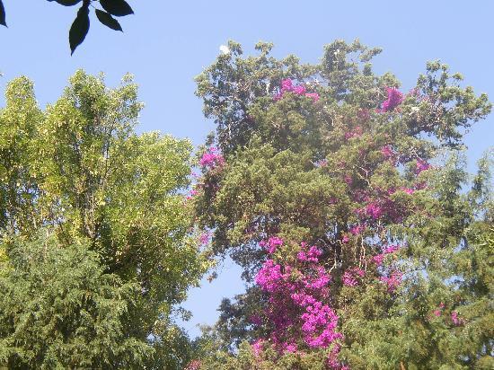 El Marqués Hacienda Hotel: Guanajuato Mexico. Hacienda del Marques. aves y flores