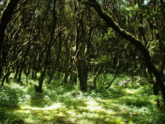 La Gomera, Espagne : Bosque de Garajonay