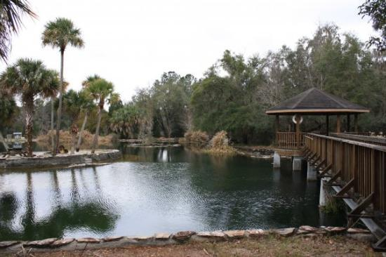 Williston, FL: The fish pond at Devil's Den