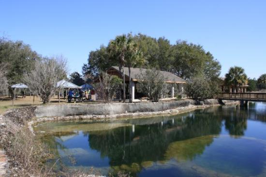 Williston, FL: The fish pond and pavilion