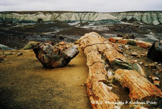 Petrified Forest National Park, AZ: The petrafied forest