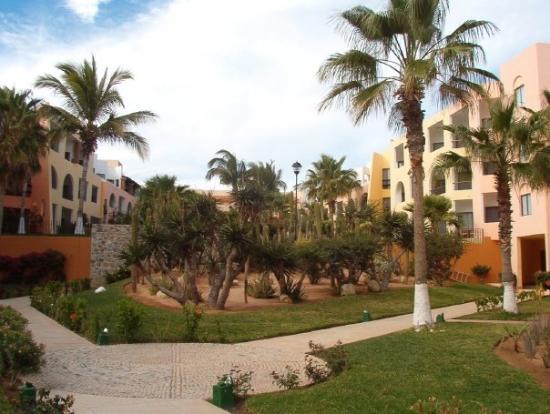 سان خوسيه ديل كابو, المكسيك: Cabo Mexico