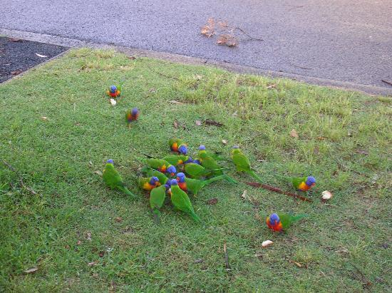 NRMA Ocean Beach Holiday Resort: Wild life at our door