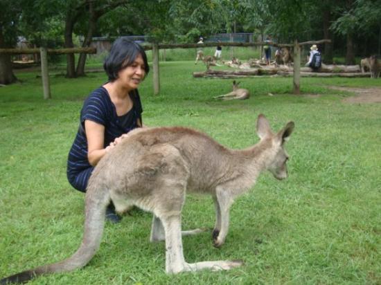 Lone Pine Koala Sanctuary: Brisbane, Australia bonding moment with a kangaroo