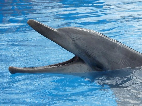 Pet Porpoise Pool - Coffs Harbour NSW