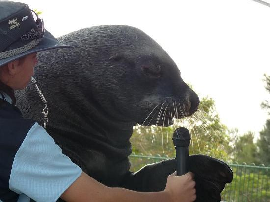 Κοφς Χάρμπουρ, Αυστραλία: Pet Porpoise Pool - Coffs Harbour NSW