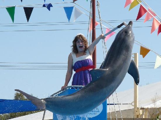 Pet Porpoise Pool - Dolphin Marine Magic: Pet Porpoise Pool - Coffs Harbour NSW