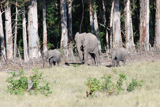 Knysna Elephant Park: from a distance