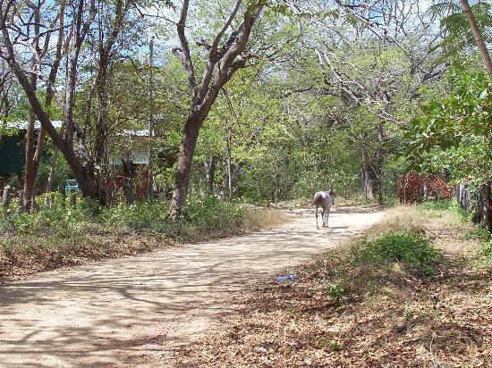 Las Mananitas: La piscine