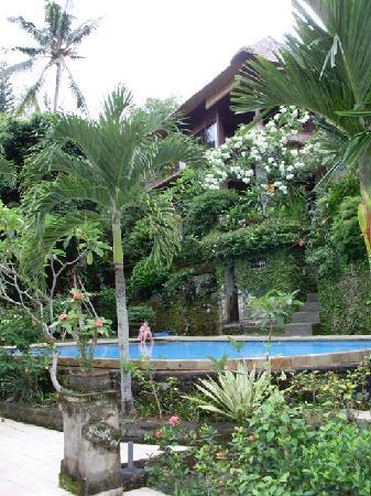 Alam Indah: looking up at Gardenia suite