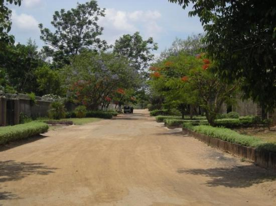 Lusaka, Zambie : Beautiful Purple jacarandas and flaming red flamboyant trees line the streets