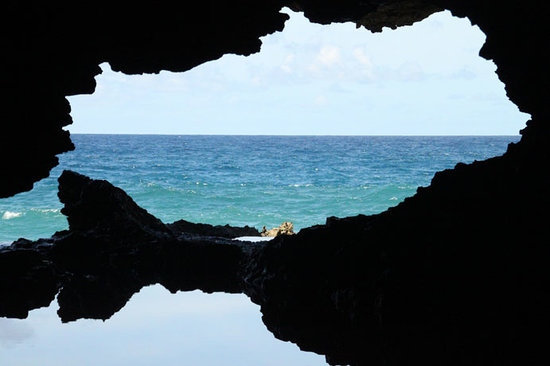 Saint Lucy Parish, Barbados: Animal Flower Cave