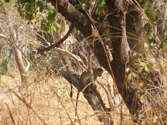 Parc National du Niokolo-Koba: au parc