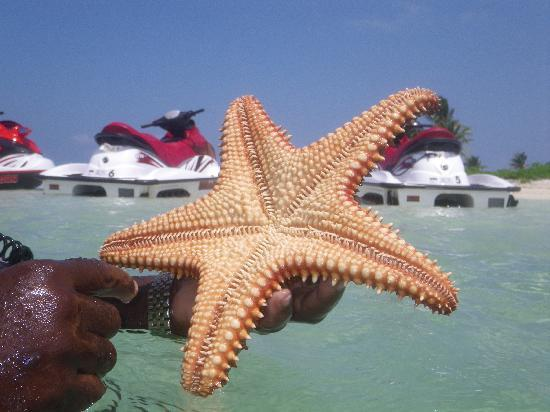 Fat Fish Adventures: Starfish Pint