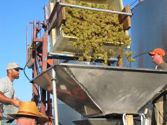 O'Brien Estate Winery: Crush of Red Wine Grapes
